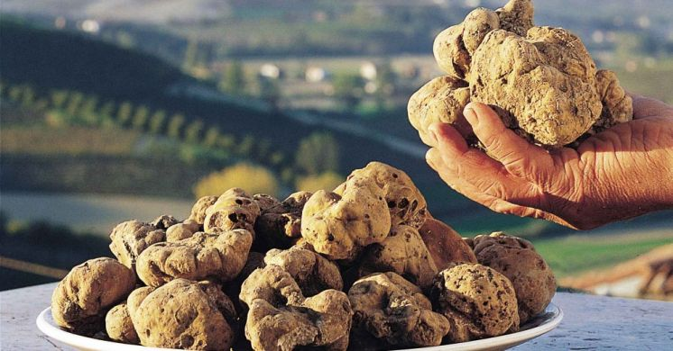 Truffles and other local gastronomic specialties